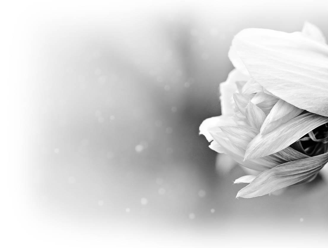 flower-back